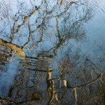 Rippling Branches