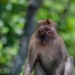 Melancholy Monkey