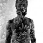 Schefflera Man